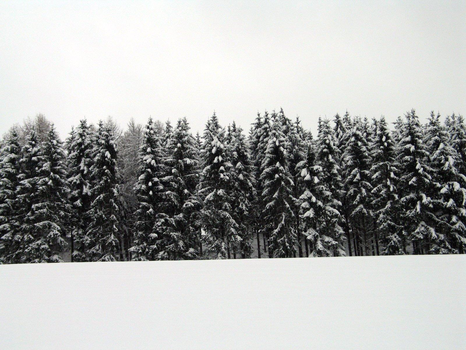 ¿Por qué casarse en invierno es una buena idea?